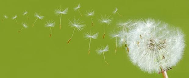 Beschwerdefrei durch die Pollenzeit trotz Kontaktlinsen